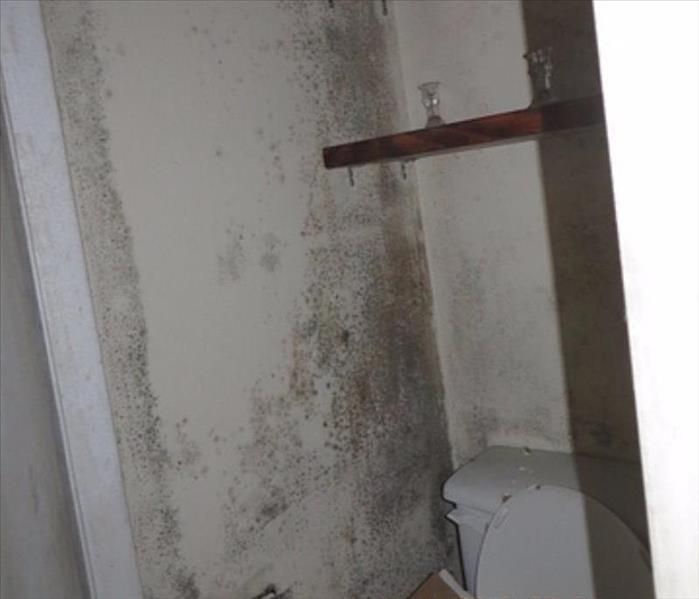 Mold Damage in Home's Bathroom