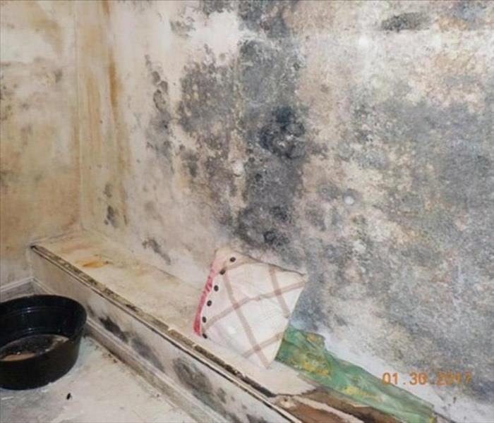 Mold Remediation How To Stop Mold Growth in Your Shower